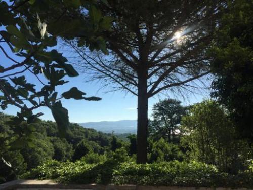 Morning Meditation /Lago di Bolsena